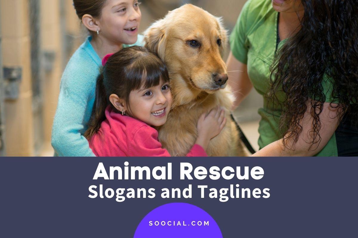 Animal Rescue Slogans