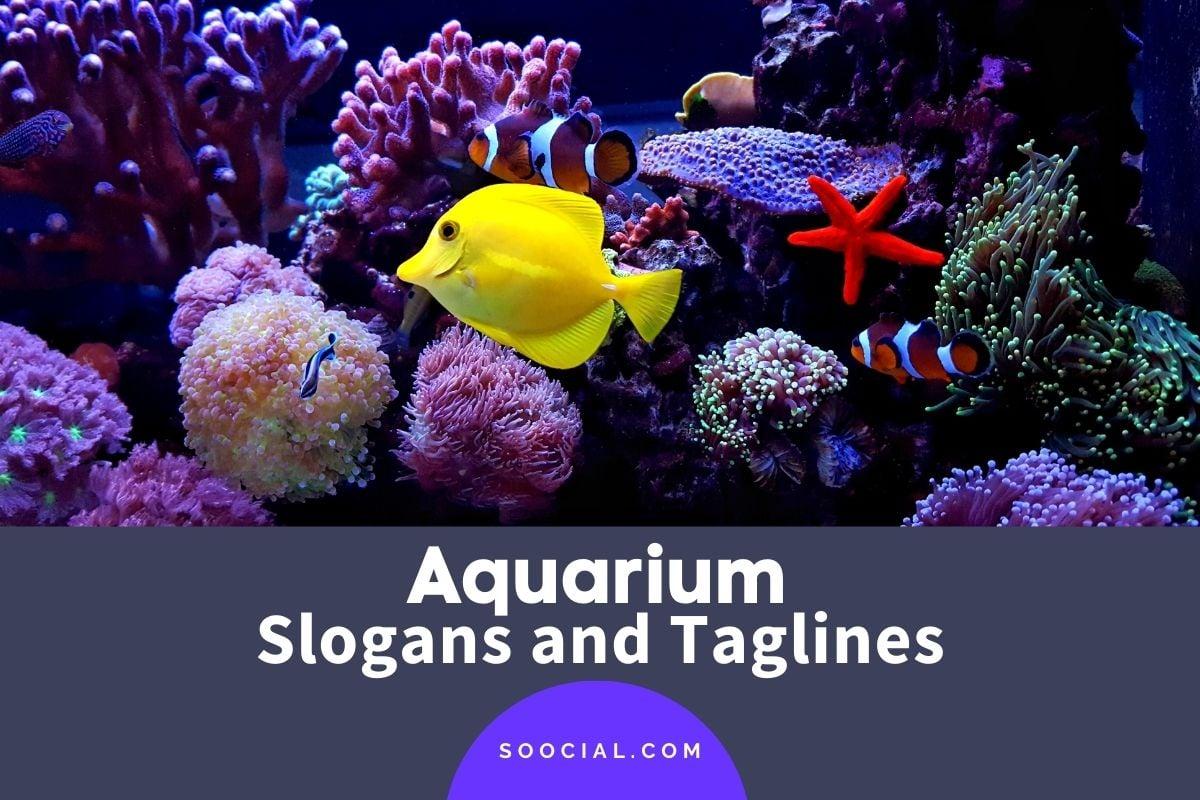 Aquarium Slogans
