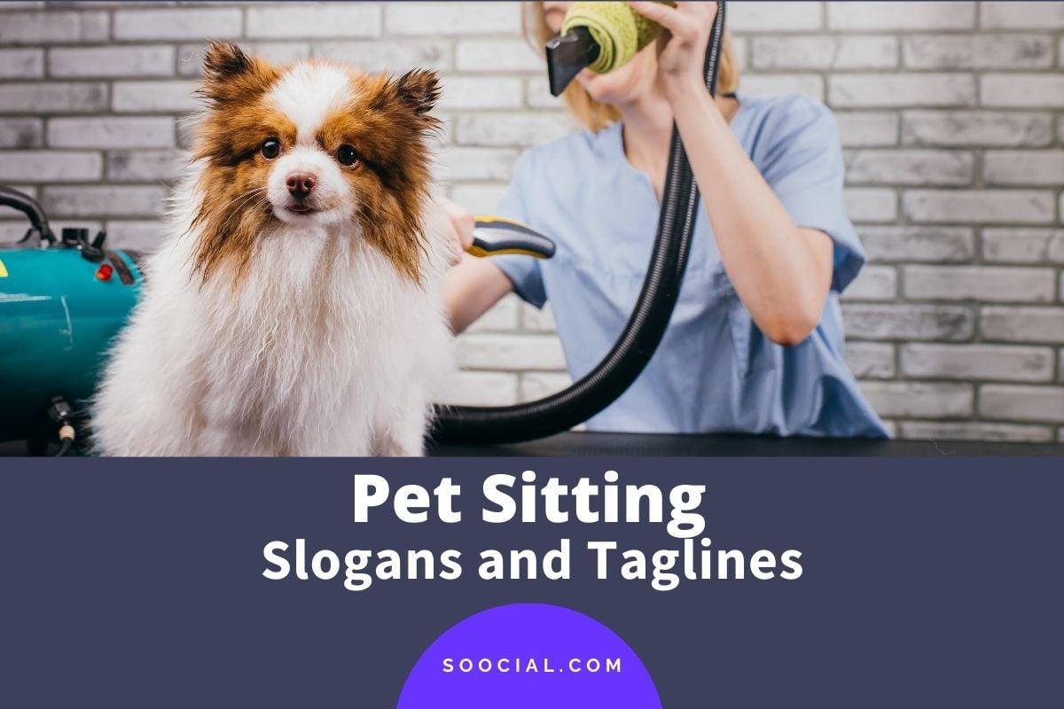 Pet Sitting Slogans