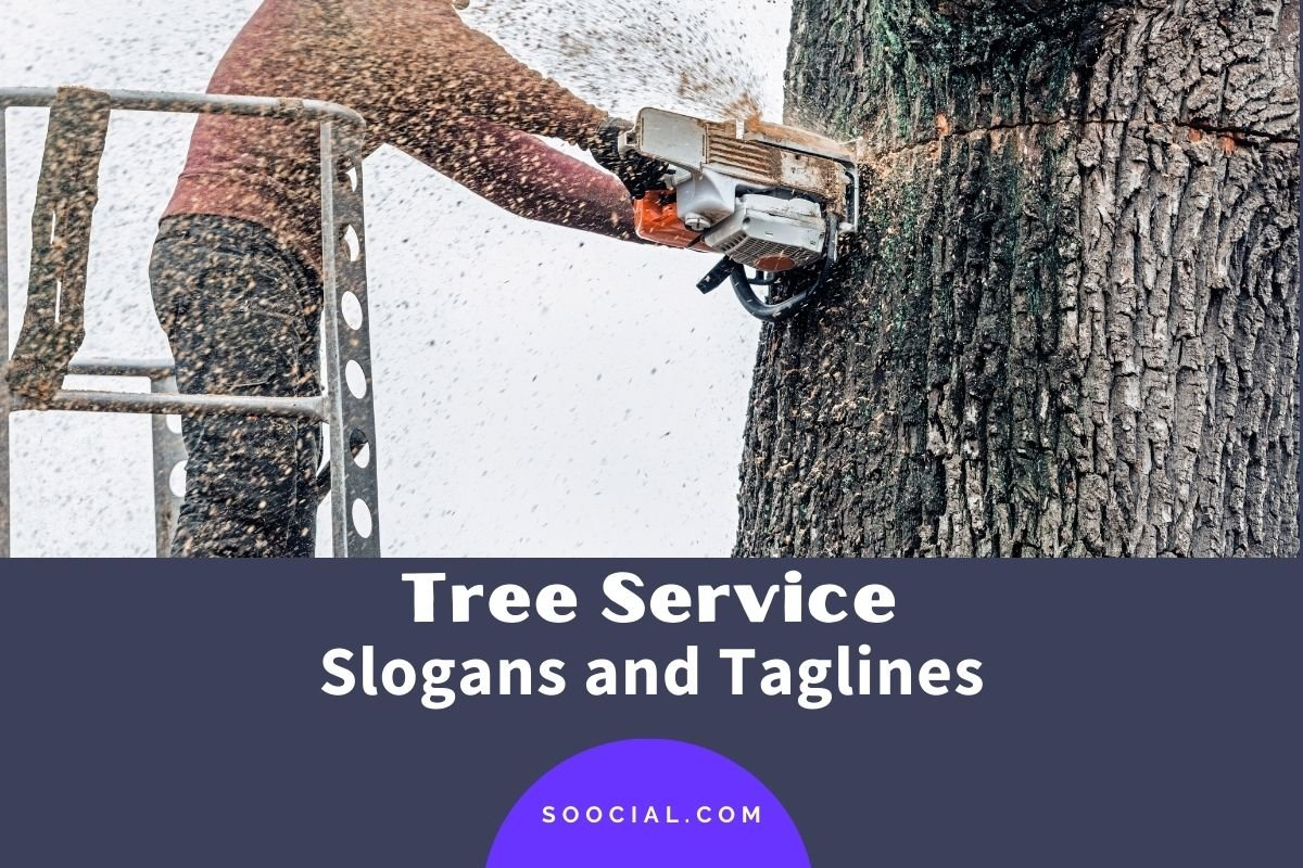 Tree Service Slogans and Taglines
