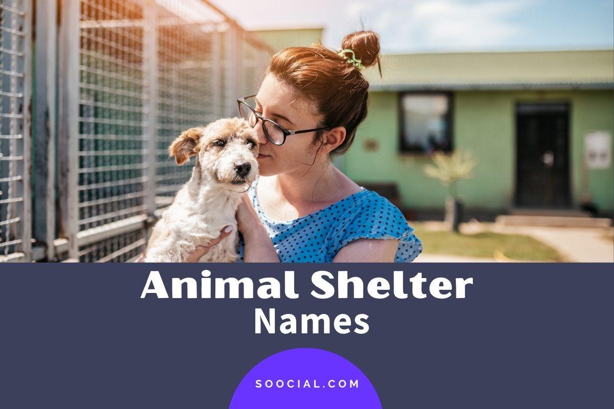 Animal Shelter Names