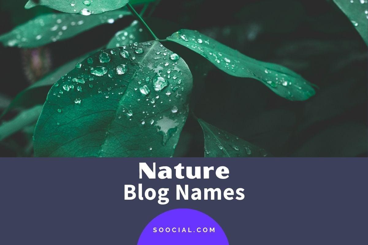 Nature Blog Names