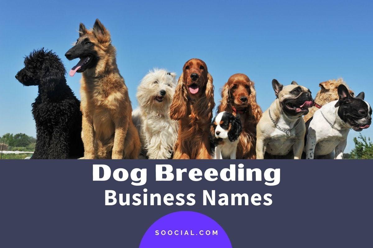 Dog Breeding Business Names