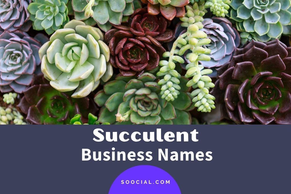 Succulent Business Names