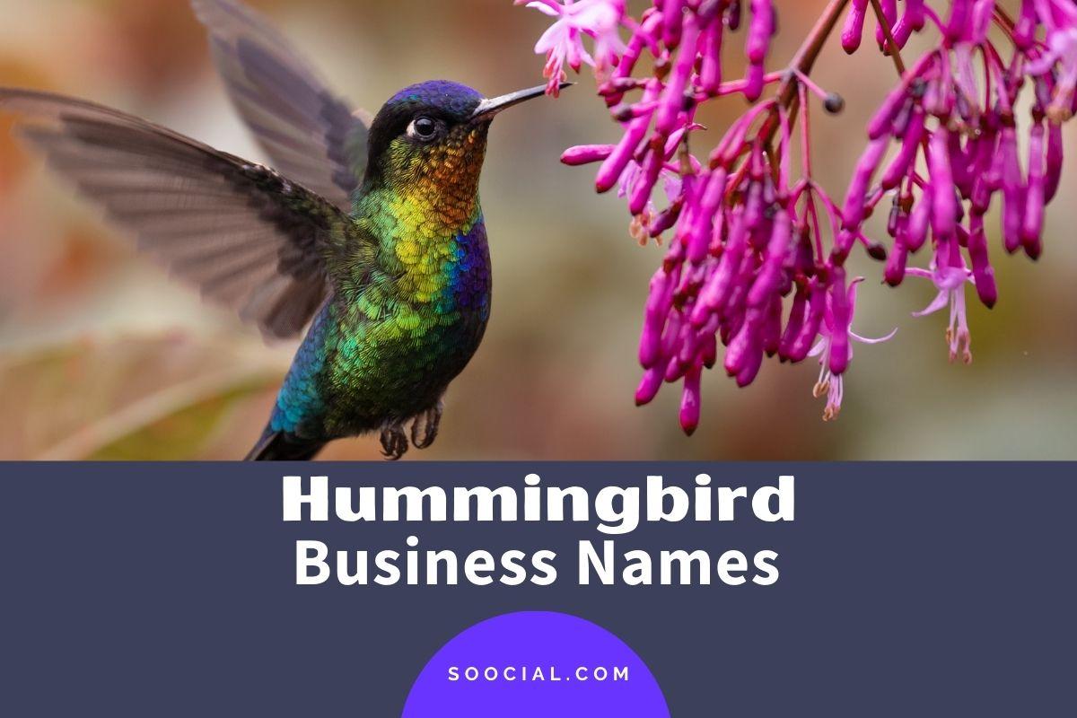 Hummingbird Business Names