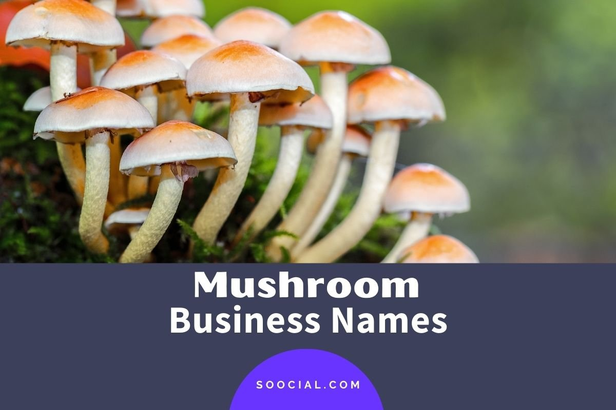 Mushroom Business Names