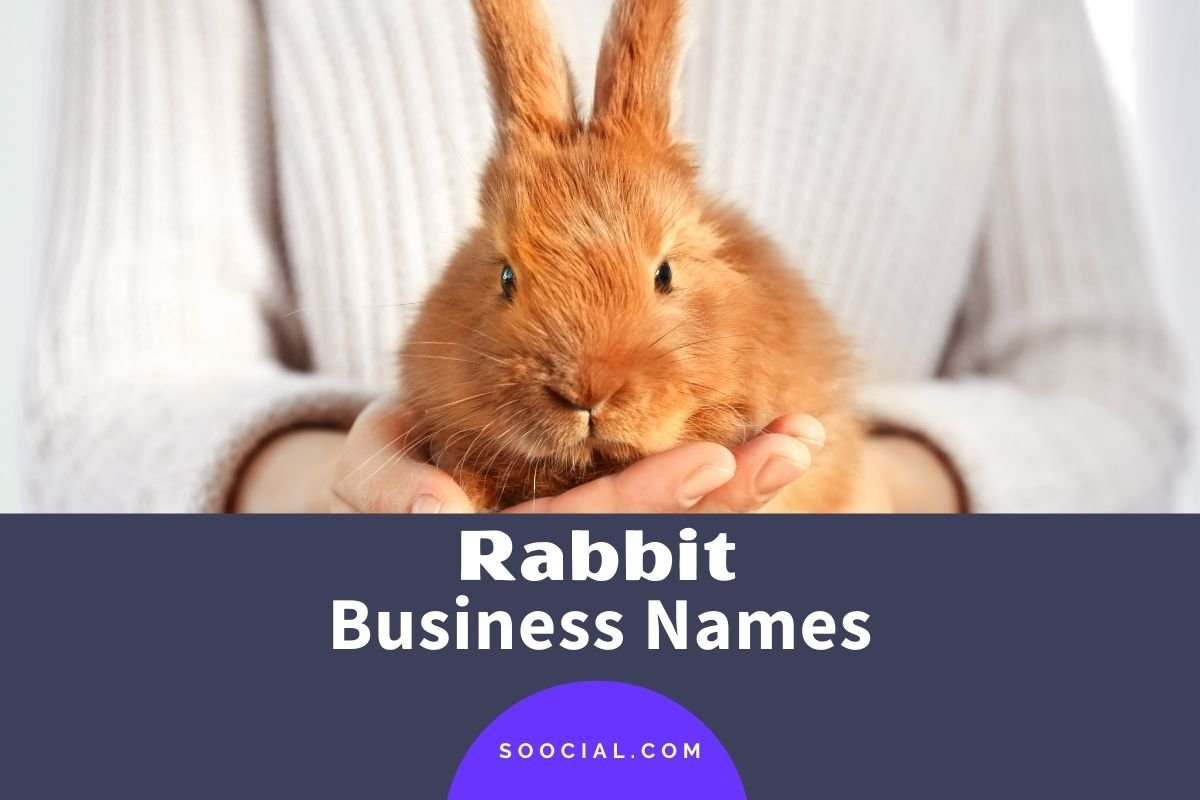 Rabbit Business Names