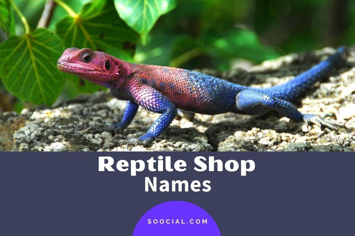 Reptile Business Names