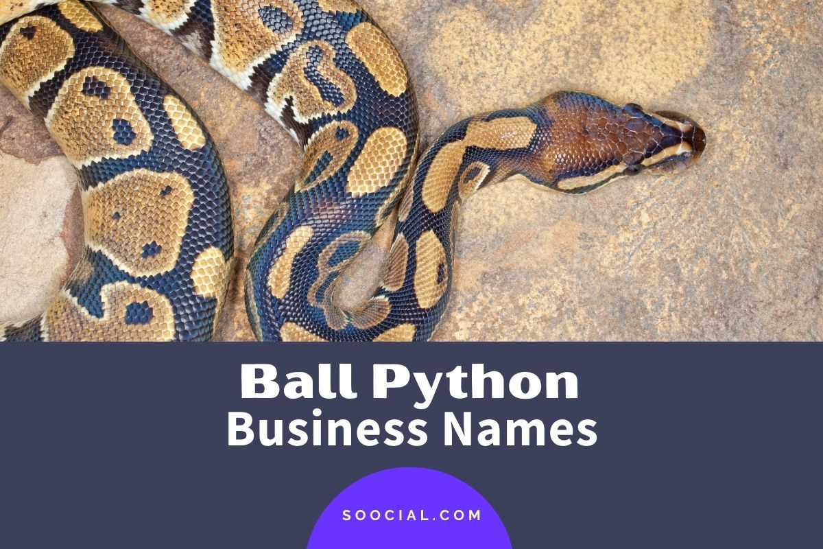 Ball Python Business Names