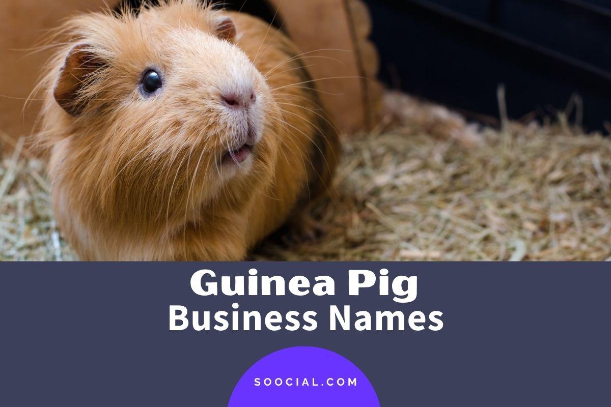 Guinea Pig Business Names