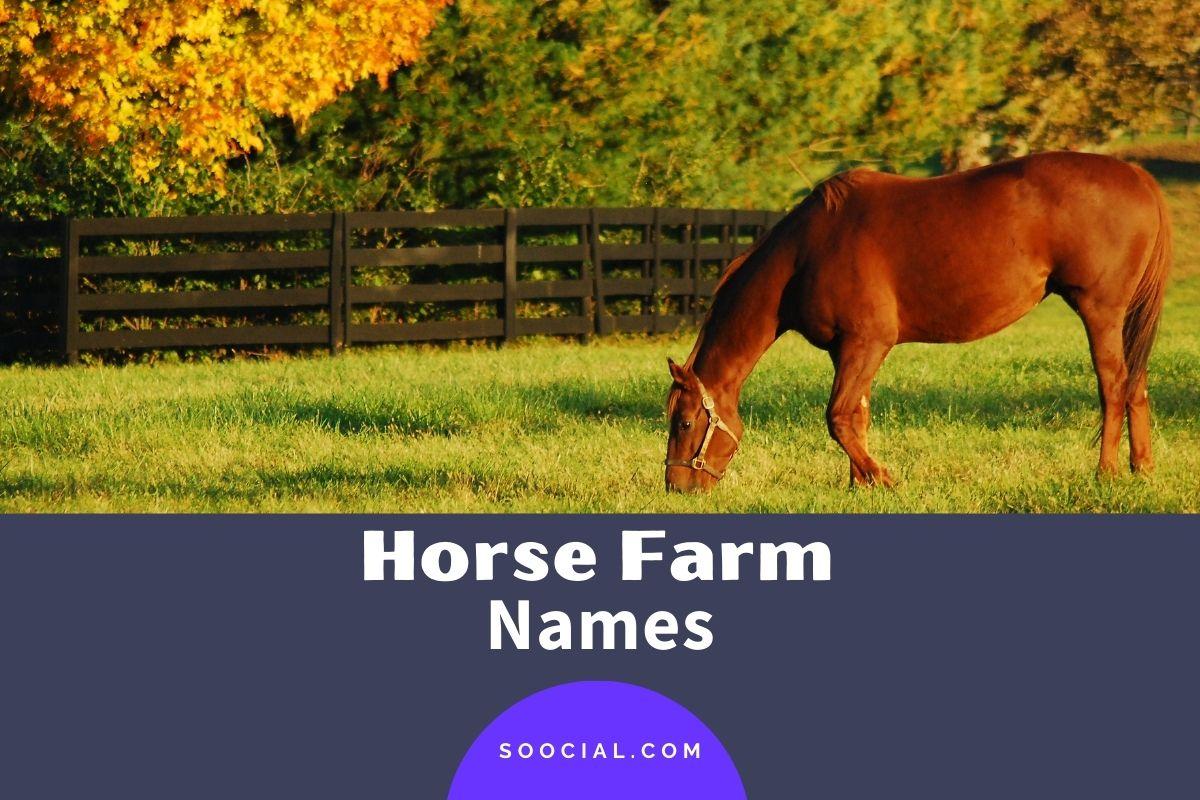 Horse Farm Names