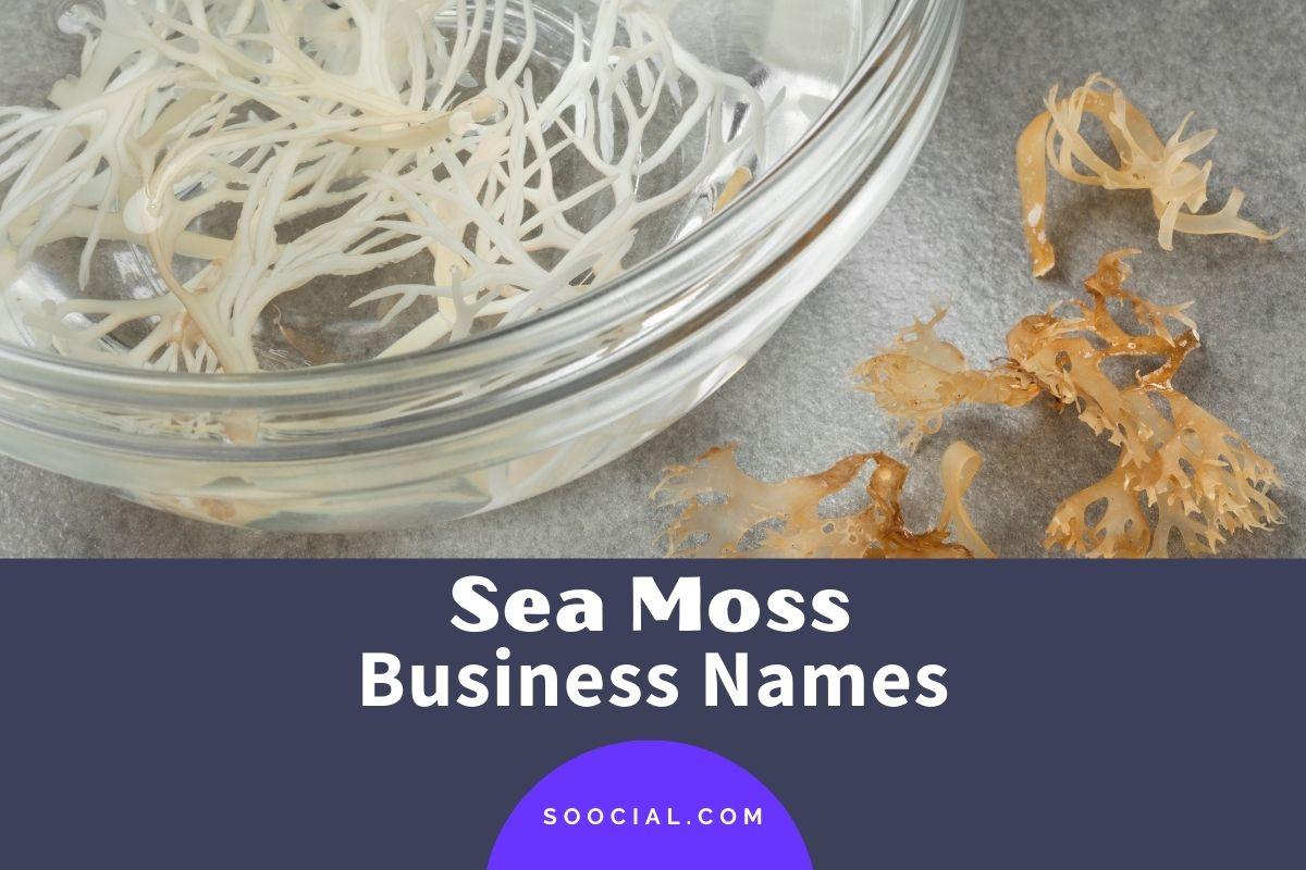 Sea Moss Business Names