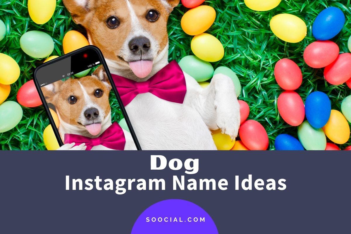 Dog Instagram Names