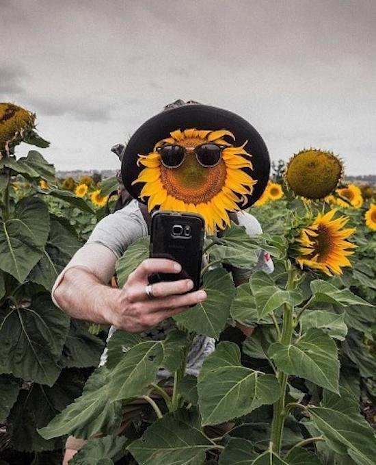 Funny Sunflower Caption