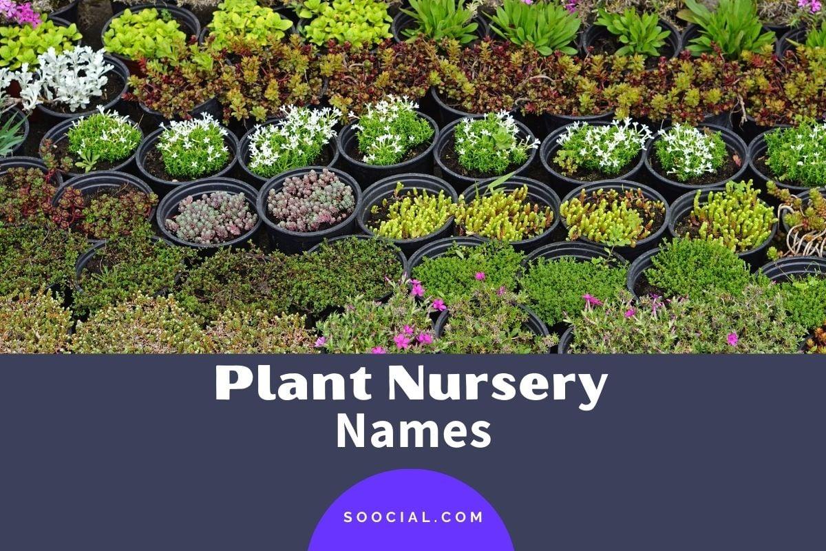 Plant Nursery Names