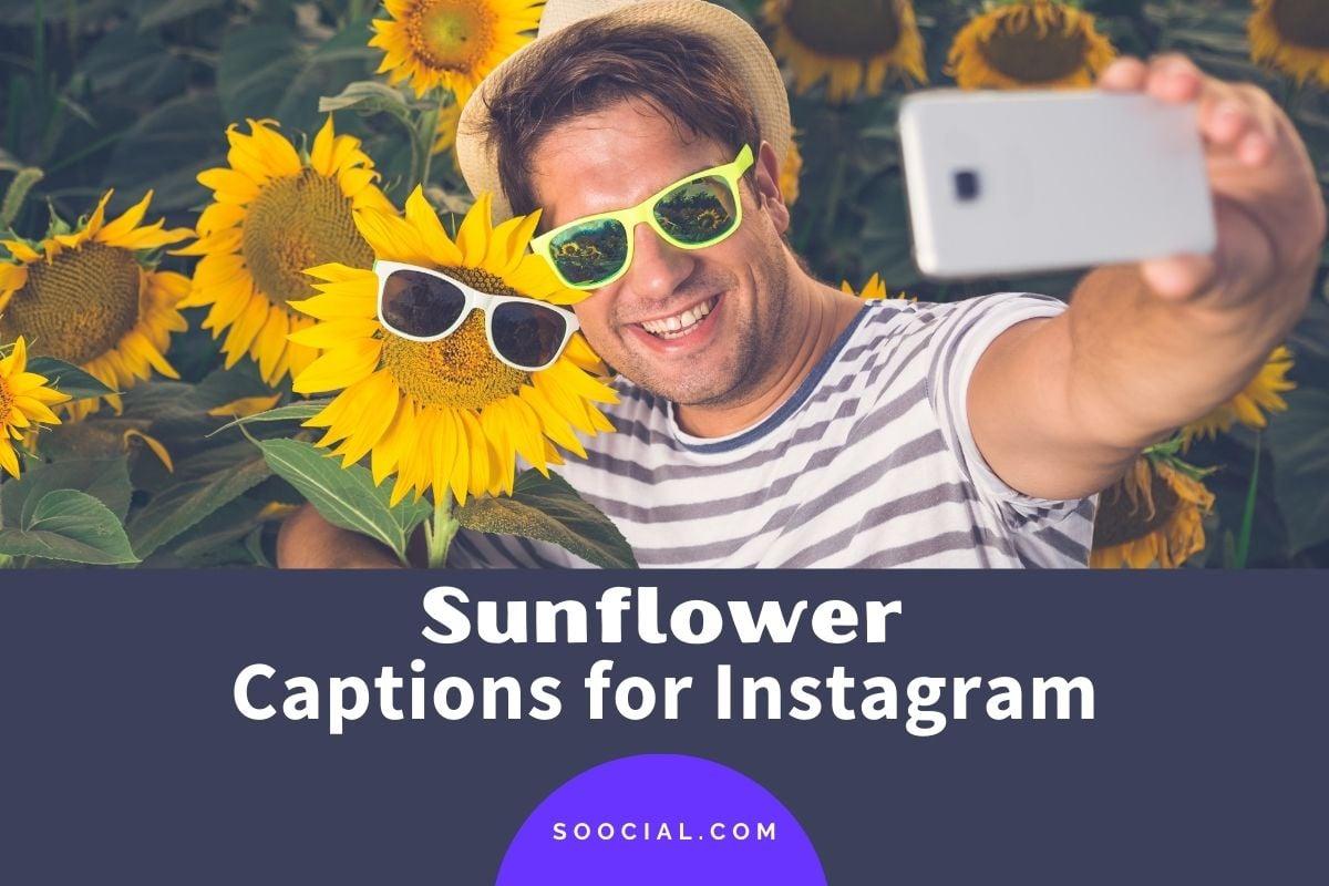 Sunflower Captions