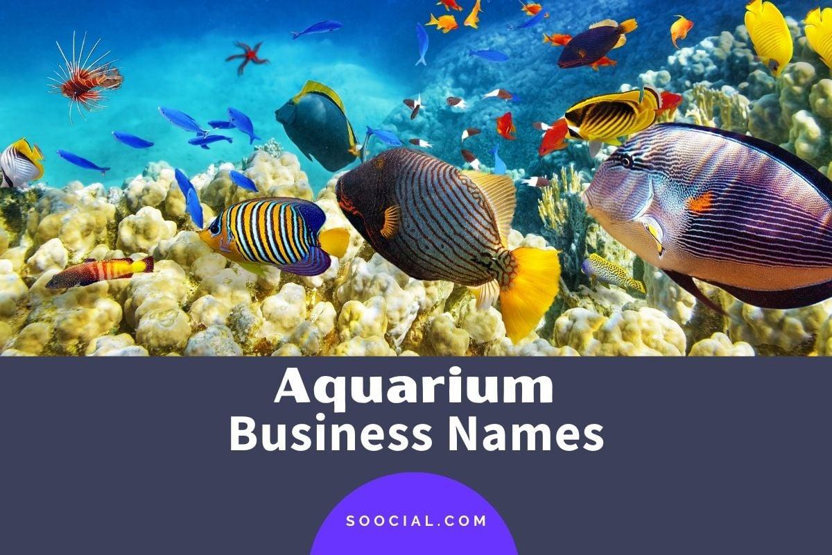 Aquarium Business Names