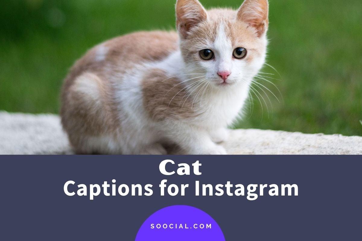 Cat Captions